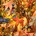 More Autum Leaves by Liz Vernand