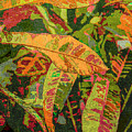 More Fern Abstraction by Janet Duffey