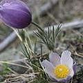 More Purple Flowers by Jesse Woodward
