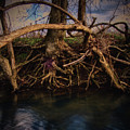More Roots In Creek by Stanton Tubb
