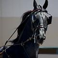 Morgan Horse by Waterdancer