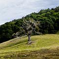 Morgan Territory Oak by Karen  W Meyer