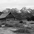 Mormon Row Famous Barn by Teresa Zieba