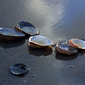 Morniing Clams II by Mary Haber