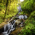 Morning At Amicalola Falls by Debra and Dave Vanderlaan