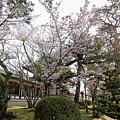 Morning At Horyu-ji Temple by Rhonda Krause