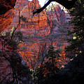 Morning At Zion National Park by Rona Black