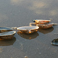 Morning Clams by Mary Haber