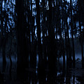Morning Cypress Mist by John Hall