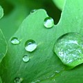 Morning Dew #2 by Kit Labossiere