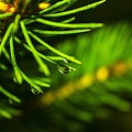 Morning Dew by Jacob Taylor