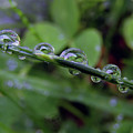 Morning Dewdrops 2 by Kim Tran