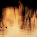 Morning Ducks 2017 by Bill Wakeley