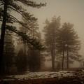 Morning Fog by Broderick Delaney