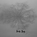 Morning Fog by Jill Smith