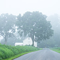 Morning Fog by Seth Dochter