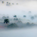 Morning Fog, Vinales Valley by Marla Craven