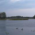 Morning Geese by Linda Kerkau