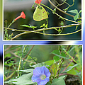 Morning Glories And Butterfly by Ericamaxine Price