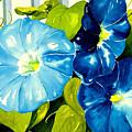 Morning Glories In Blue by Janis Grau