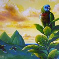 Morning Glory - St. Lucia Parrots by Christopher Cox