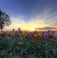 Morning Glory by Betty Doran