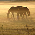 Morning Grazing by Jack Norton
