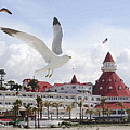 Morning Gulls On Coronado by Margie Wildblood