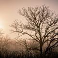Morning Has Broken by Annette Berglund