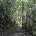 Morning Hike On Waihee by RJ Bridges