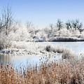 Morning Hoar Frost by Marilyn Hunt