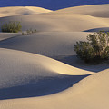 Morning In Death Valley Dunes by Sandra Bronstein