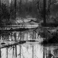 Morning In The Swamp by Pixabay