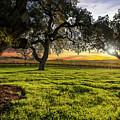 Morning In Wine Country by Jon Neidert