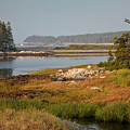 Morning Light At Schoodic  by Susan Cole Kelly