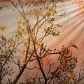 Morning Light by John M Bailey