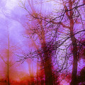 Morning Mist by Judi Bagwell