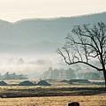 Morning Mist by Linda A Waterhouse