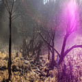 Morning Misty Flare by William Tasker