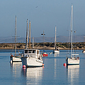 Morning On Morro Bay B3984 by Stephen Parker