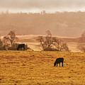 Morning Pasture by Frank Wilson