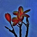 Morning Plumeria by Craig Wood