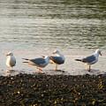 Morning Seagulls by George Jones