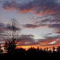 Morning Silhouetted - 1 by Shirley Heyn