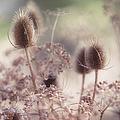 Morning Softness. Wild Grass by Jenny Rainbow