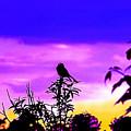 Morning Song by Jeff McJunkin
