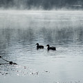 Morning Stroll by Annette Persinger