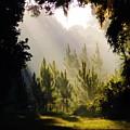 Morning Sunshine by D Hackett