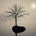 Morning Tranquility Toned by David Gordon