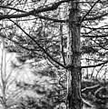 Morning Tree by Mattice Aaland